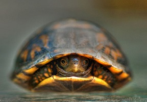 turtle-in-shell